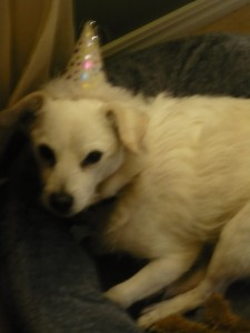 Picture of a dog  in a party hat